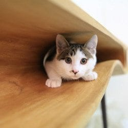 CATable: A Table For You And Your Cat