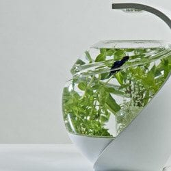 Avo: Self-Cleaning Fish Tank